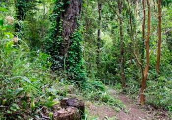 slider12-bosque